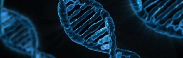 Nuevos genes responsables de la obesidad infantil