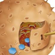 Lucha contra la diabetes: descubren que otras células pueden producir insulina